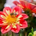 美容だけじゃない。花粉症対策に効く話題のスーパーフードとは?