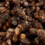いつでも新鮮!里芋の保存方法3+1つのポイント 【秘訣はベランダや庭の畑で】