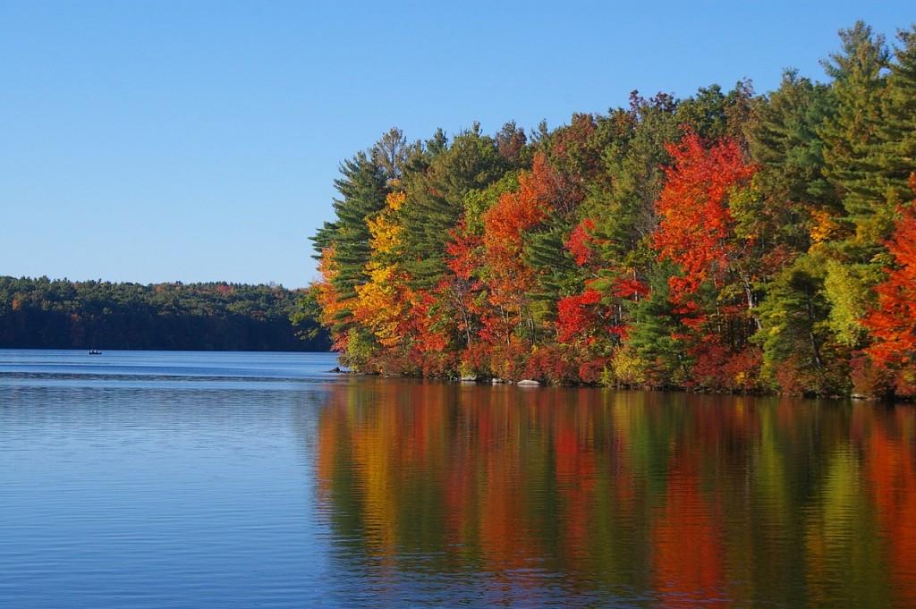 箱根の紅葉の画像