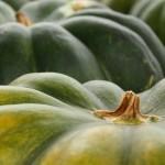 坊ちゃんかぼちゃの一番人気料理と見た目も可愛いまるごと活用法レシピ3品