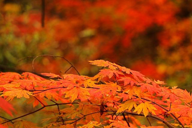 関東の紅葉の画像