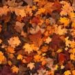 鎌倉の紅葉の画像