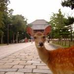 東大寺の修二会2016!日程や宿泊情報、混雑を避ける狙い目の日は?