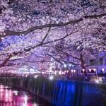 目黒川でお花見2016!桜のライトアップ時間は?厳選お花見コース