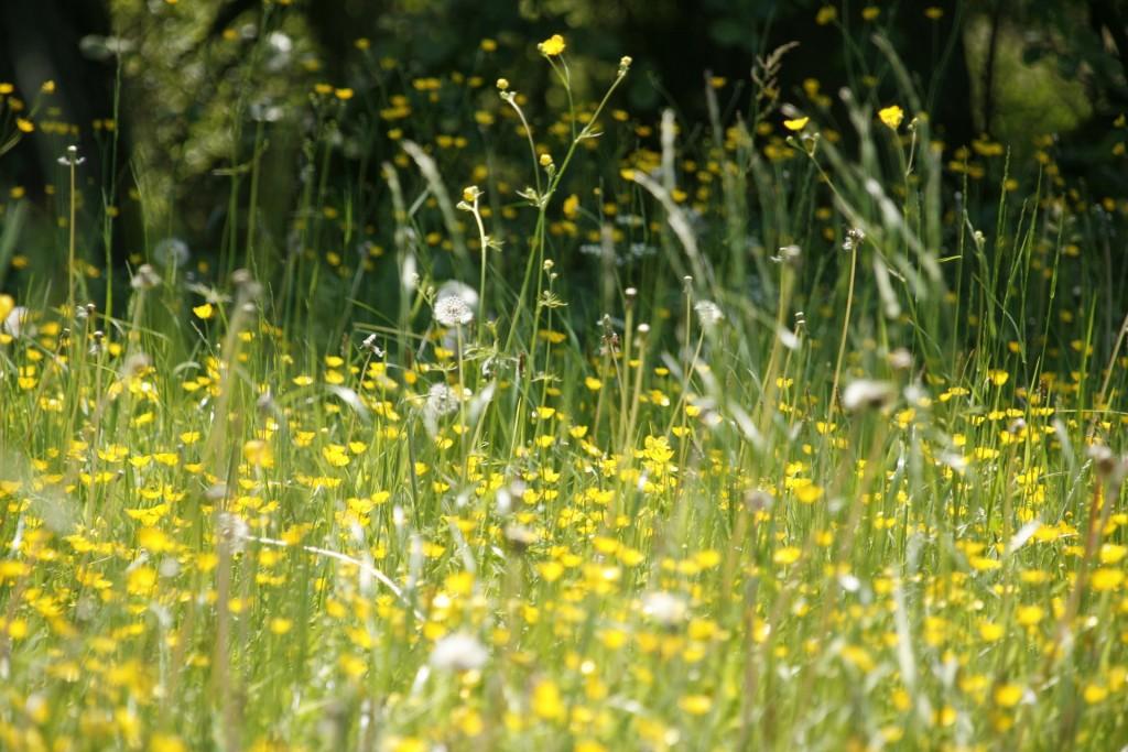 春の草原の画像
