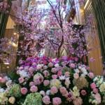 東京ミッドタウンの桜が楽しめるレストラン|桜まつりイベント情報