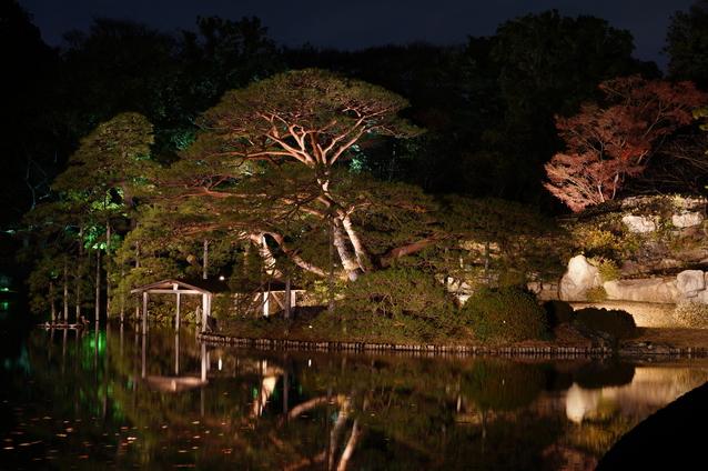 夜桜の画像