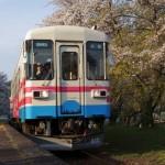 2016淡墨桜開花予想!ローカル鉄道で行く三大巨桜の旅