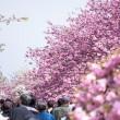桜の通り抜けの画像