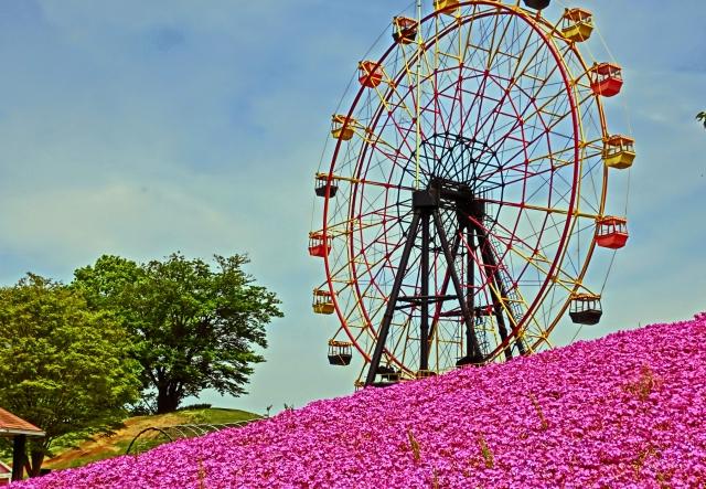 芝桜と観覧車の画像