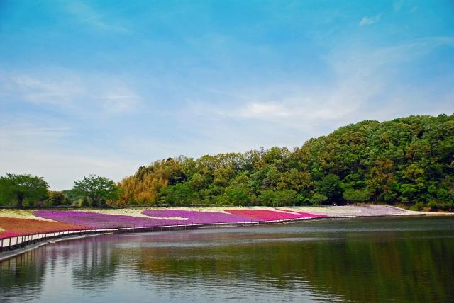 芝桜と湖の画像
