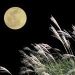 中秋の名月にススキを飾る意味は?意外と知らないお団子を供える正しい作法