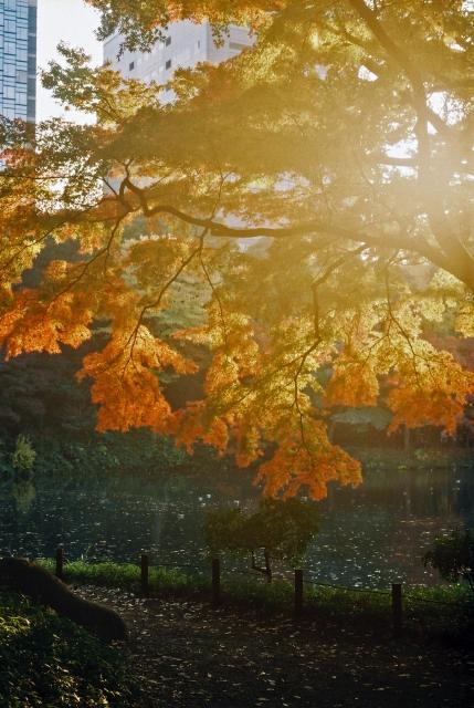紅葉の夕焼けの画像