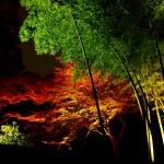 六義園紅葉の見頃&ライトアップを見逃すな!秋を堪能してご利益気分の銭湯へ