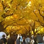 明治神宮外苑紅葉の見頃は?2016いちょう祭り今年も開催、締めくくりは銭湯で