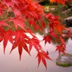 世界遺産日光の紅葉の見頃や数あるライトアップの中でも選りすぐりの名所はここだ!