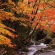 秋の渓谷の画像