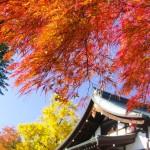 本土寺の芸術的な紅葉の見頃やライトアップは?日帰り銭湯で余韻に浸ろう