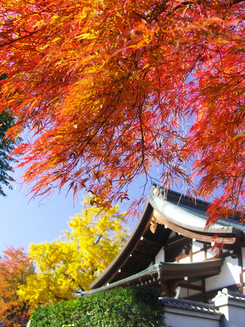 本土寺の紅葉の画像