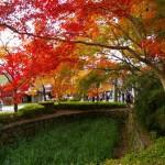 秋月城跡周辺の紅葉はまるで江戸時代にタイムスリップしたよう!武者行列やダブル美肌の湯も