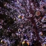 目黒川イルミネーション2016過去最大の冬の桜エリア拡大&開催期間延長!