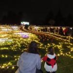 2016昭和記念公園の参加型イルミネーションを満喫!冬の花火やミニコンサートで楽しむ