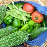 苦くないゴーヤジュースの作り方と効能!夏バテ防止&夏の美肌対策に効く理由