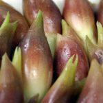 ミョウガの食べ過ぎは馬鹿になる?栄養効果と夏を乗り切る成分が豊富なミョウガ料理の作り方