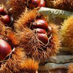 栗を食べて風邪しらず!栄養価が高い風邪の予防や改善が期待できる渋皮煮レシピ