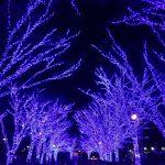 渋谷が神秘の街に!2017青の洞窟イルミネーション開催決定!あなたの街にも青の洞窟がやってくる